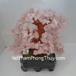 cay-thach-anh-hong-01