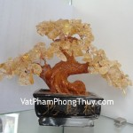 cay-thach-anh-vang-ca212