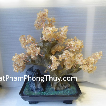 cay-thach-anh-ca202-01