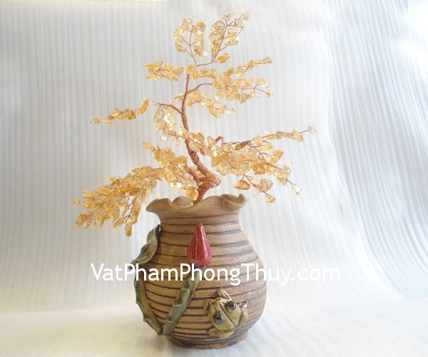 cay-thach-anh-vang-ca244-1